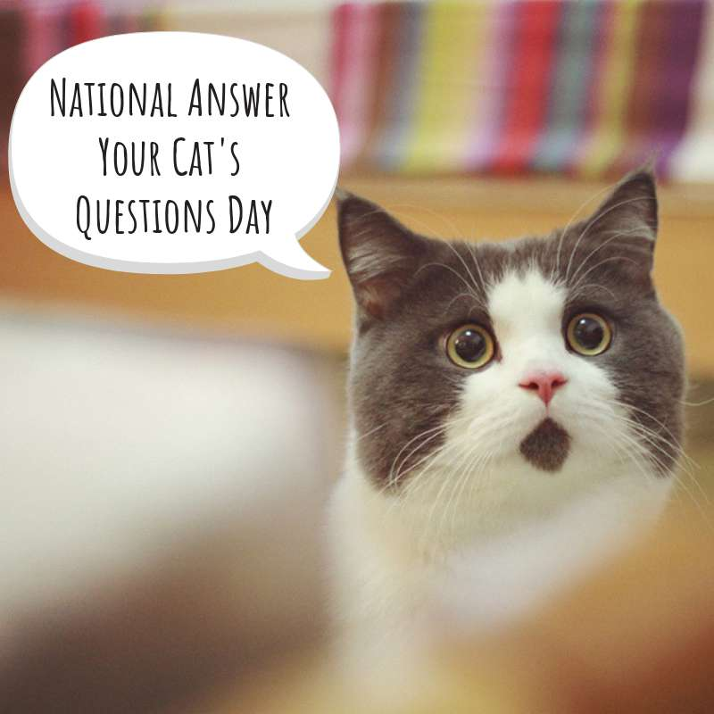 National Answer Your Cat's Questions Day Wishes