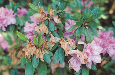 Предпазване на растението от болести и паразити
