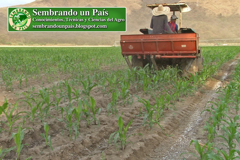 fertilización del maíz con maquinaria