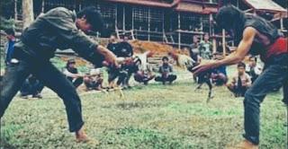 """Mengenal """"Silondongan"""" dan 3 Fungsi Ayam jantan Dalam Kalangan Masyarakat Toraja"""
