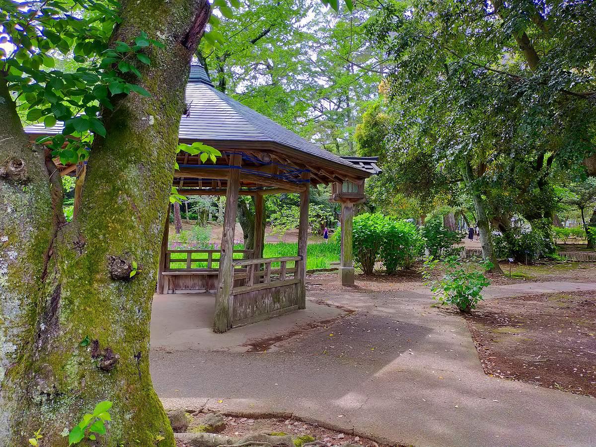 出雲大社への参道は手入れが行き届いた庭のようです。