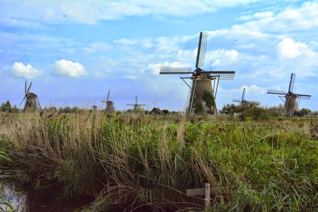 Kinderdijk long grass
