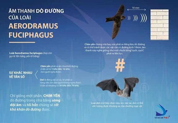 Hình 4: Đặc điểm âm thanh dò đường của chim yến hàng