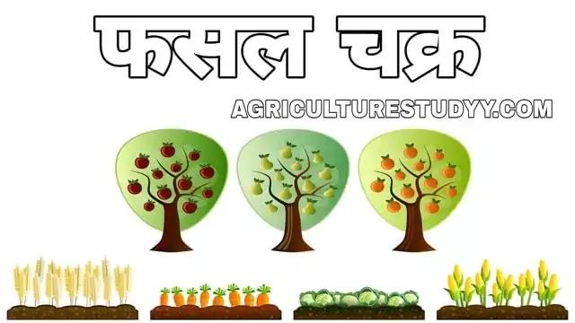 फसल चक्र क्या है इसकी परिभाषा, crop rotation in hindi, fasal chakra, फसल चक्र के प्रकार, फसल चक्र के लाभ व हानि, फसल चक्र के सिद्धांत, सस्य योजना, फसल