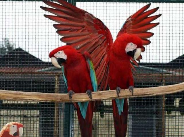 Buongiornolink - Richiesto maxi risarcimento per pappagallo ucciso con una pallonata