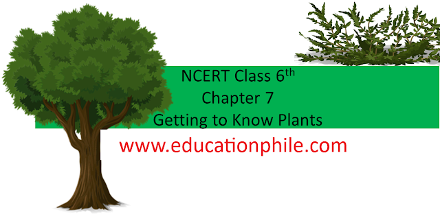 CBSE Class 6 NCERT Solutions, CBSE Solutions, Free Class 6 Science Solutions, Free NCERT Solutions, Getting to Know Plants, NCERT Books Solution, NCERT CBSE Class 6 Science Solutions, NCERT CBSE Solutions, NCERT Solutions, NCERT Solutions For Class 6 Science Chapter, NCERT Solutions For Class 6 Science Solutions,