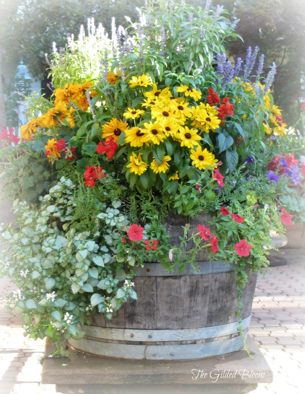 Summer container gardening the gilded bloom Sun garden riesling