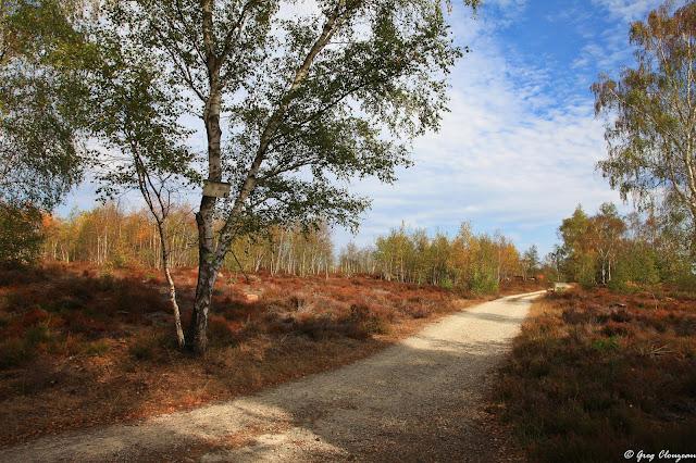 Chemin de Coquibus, Trois Pignons, Fontainebleau
