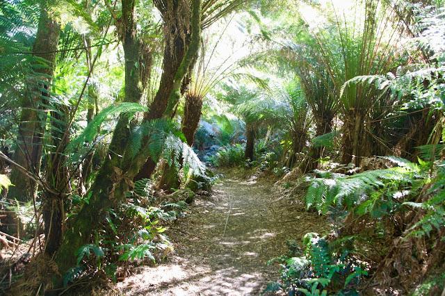 dirt track through rainforest