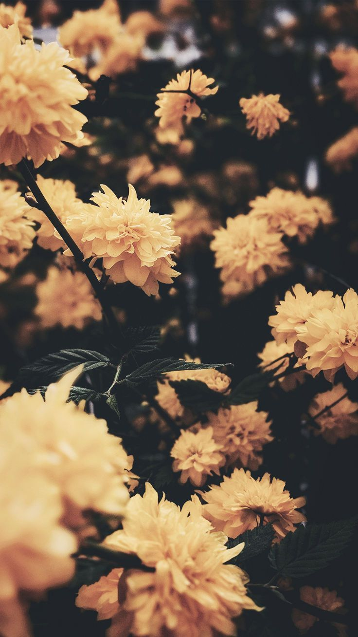 wallpaper iphone xs, fiori