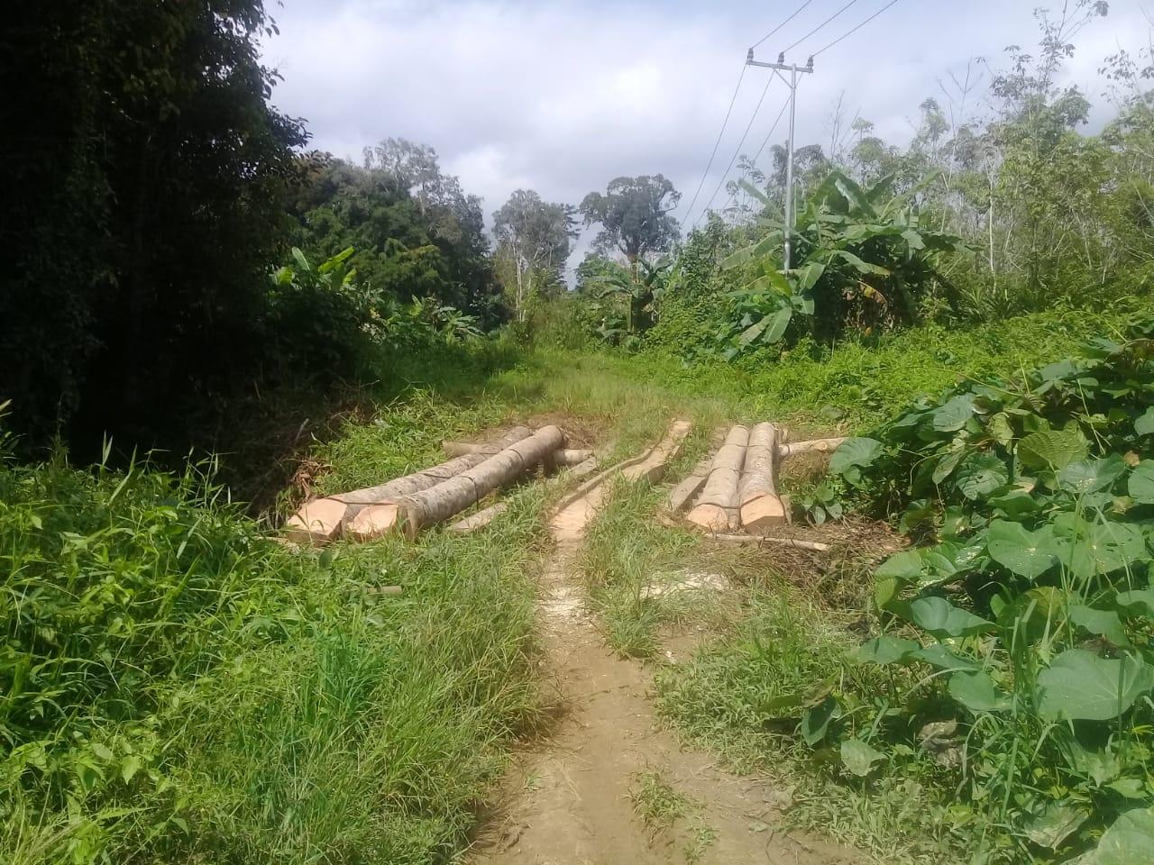 Warga Desa Bantai Napu Minta Pemkab Bartim Memperhatikan Akses Jalan Yang Menjadi Sumber Ekonomi Masyarakat