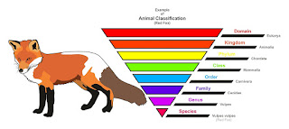 classification of fox