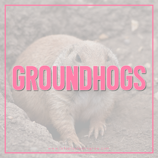 Groundhog-Theme