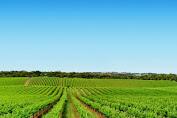 HIPMI NTB Dorong Pengembangan Agroindustri.