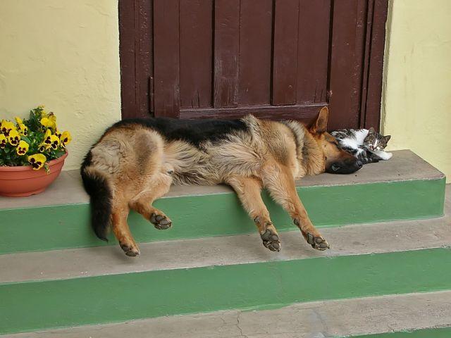 drzwi, pies, kot, kwiaty, schody