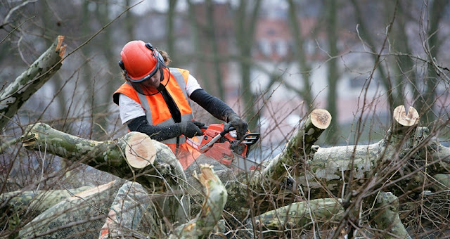 Image result for tree removal service