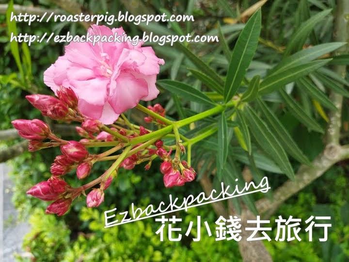 香港夾竹桃