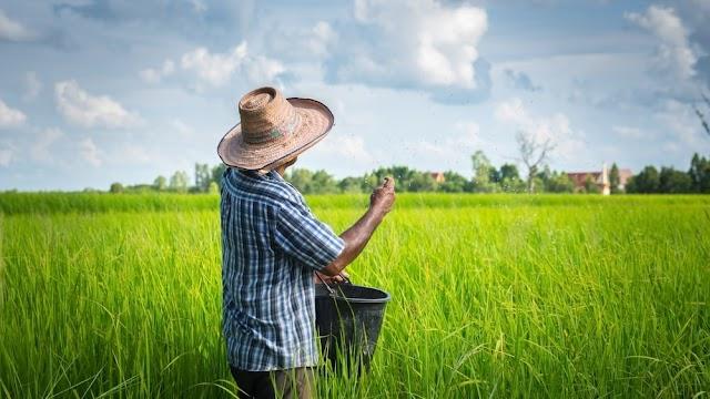 InvesTani: Solusi Indonesia untuk Swasembada Hasil Pertanian