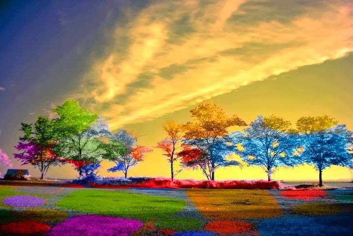 Colorful Nature Scenes
