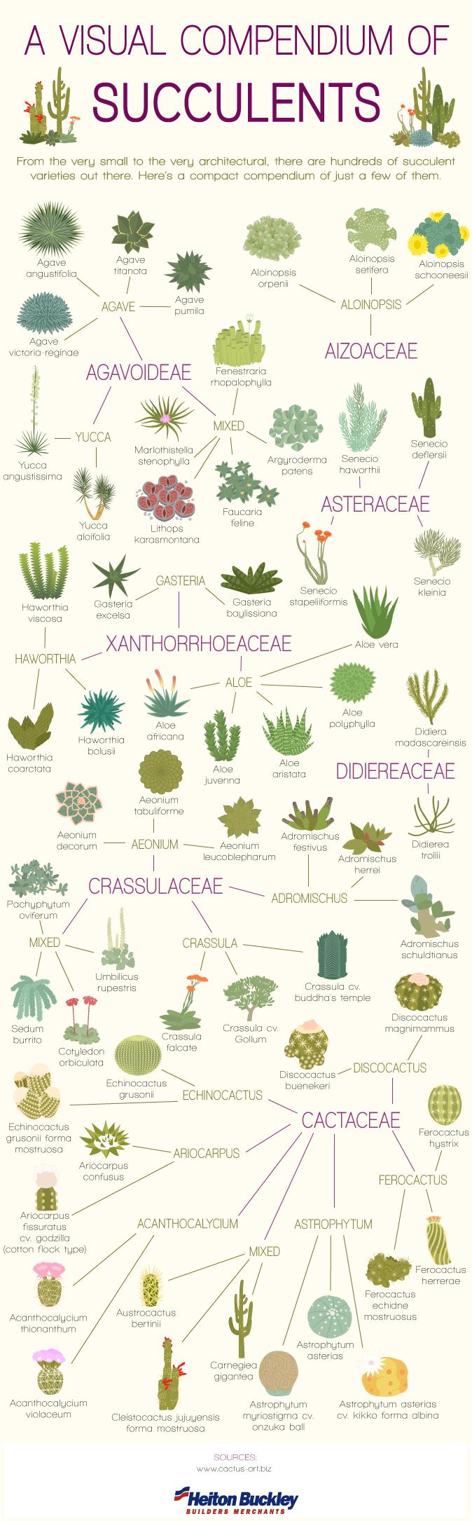 infografia con familias y especies de las plantas suculentas