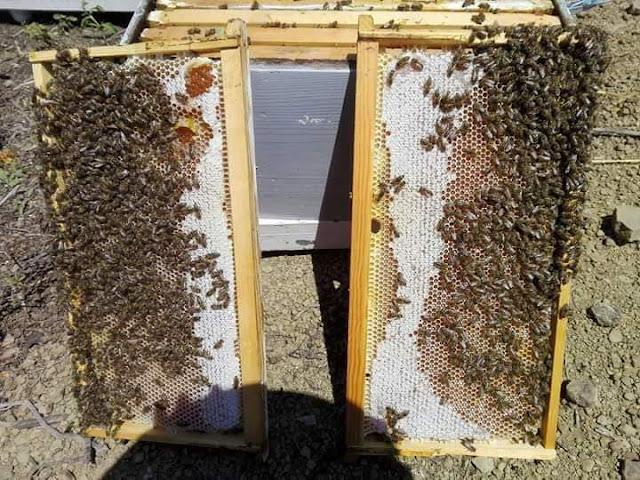 Πωλείται ανοιξιάτικο μέλι από ρείκι στην Άρτα