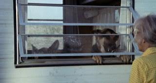 Doggie actors
