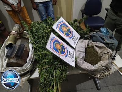 Polícia localiza plantio de maconha na zona rural de Manari e prende tres envolvidos
