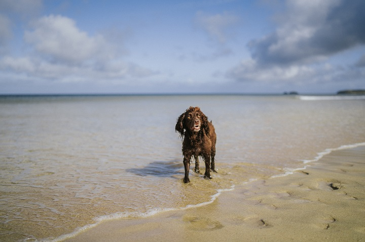 Cornwall Bucket List with your Dog