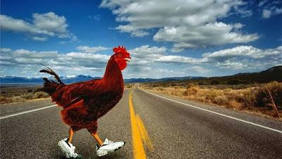 ¿Por qué la gallina cruzó el camino? Los magufos responden