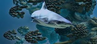 وجدت أسماك القرش القديمة طريقة بديلة للتغذية