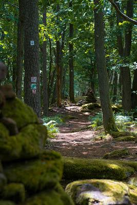 Wasgau-Felsenweg | Wandern Südliche Weinstraße | Naturpark Pfälzerwald 10