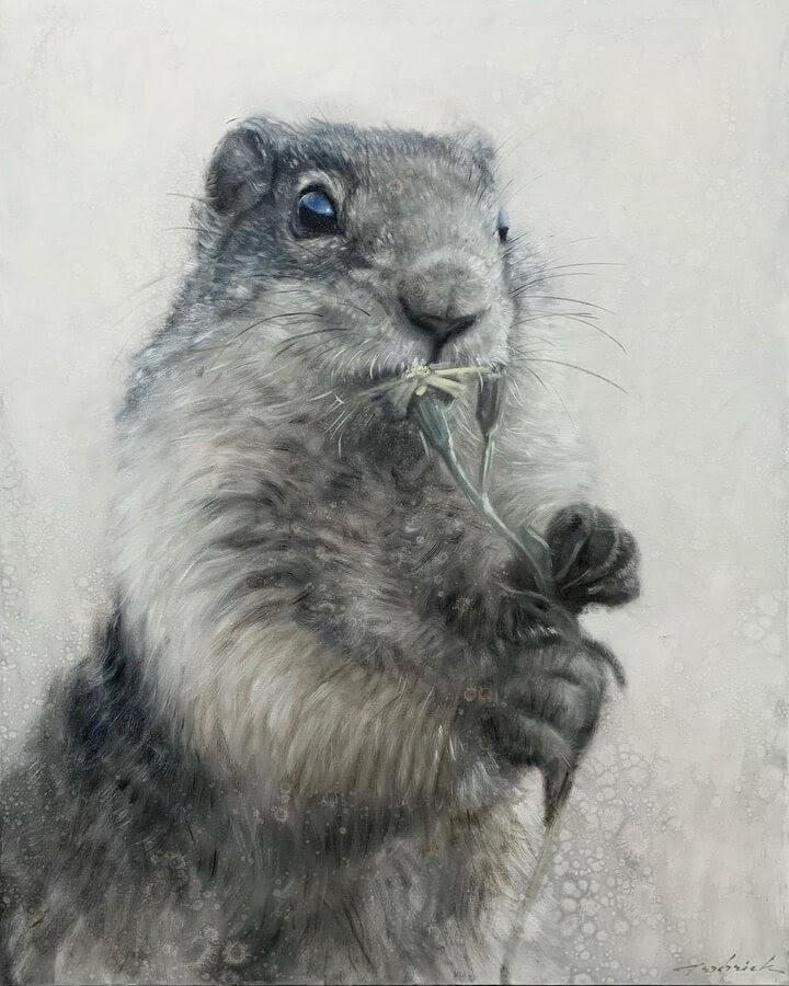 01-Marmot-David-Riley-www-designstack-co