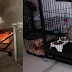 A mother in Bacolod died after going back into a burning house trying to save her 9 puppies
