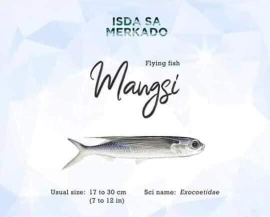 Isda Tinatawag ding Borador, Iliw, Bangsi; Barungoy (Short-nosed flying fish) / Bansi, Barongoy, Calereon; Calarion (Small-scaled flying fish)