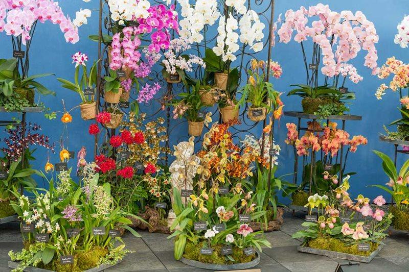 Orquídeas Vacherot & Lecoufle