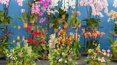 Plantas, flores e inspiración en Hampton Court Flower Show 2017
