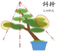 斜幹樹形の整形の基本