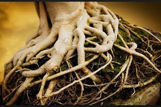 pengertian jenis dan fungsi akar pada tanaman