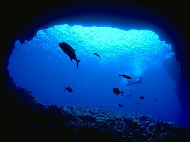 Οι ωκεανοί κινδυνεύουν από ασφυξία!