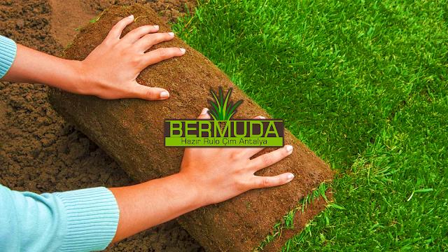 ÖZEL ÇİM ÜRETİMİ ANTALYA Bermuda