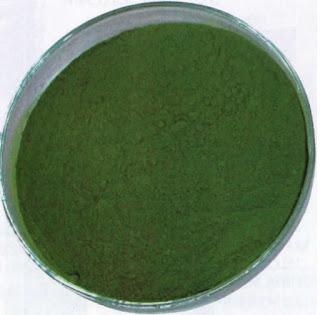 Chlorella sp