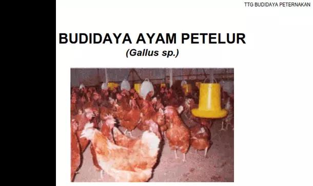 Buku Budidaya Ayam Petelur