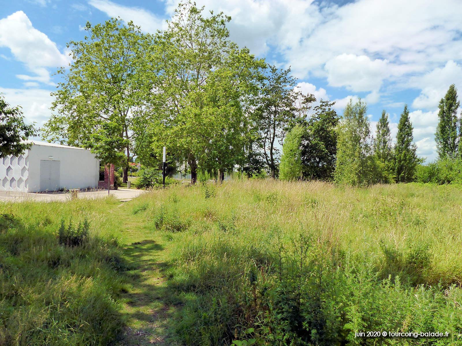 Jardin des Lettres, fauchages tardifs, Tourcoing 2020