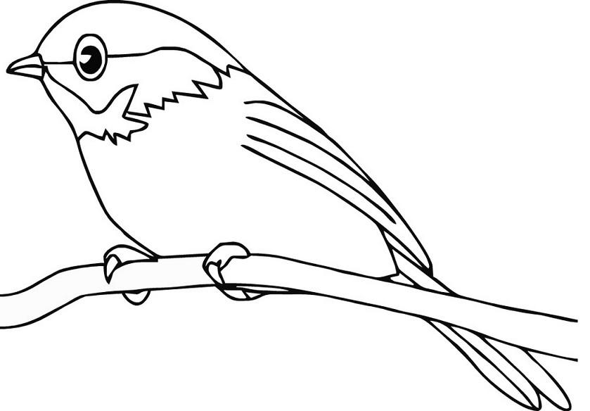 Tidak Kalah Menariknya Yakni Mengenai Gambar Mewarnai Untuk Anak Yakni Denah Gamabr Bur Sketsa Gambar Burung