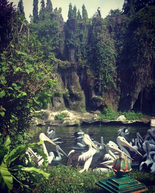 foto bangau di kebun binatang ragunan