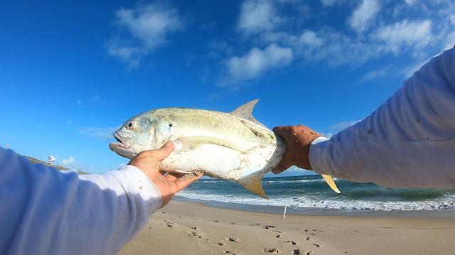 Fish Report, Fishing Report, Florida, East Coast, Fishing, Anglers, Beach Closures, God Bless, Surf Fishing, Florida Surf Fishing,