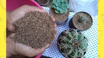 dicas de substratos caseiros  para suculentas