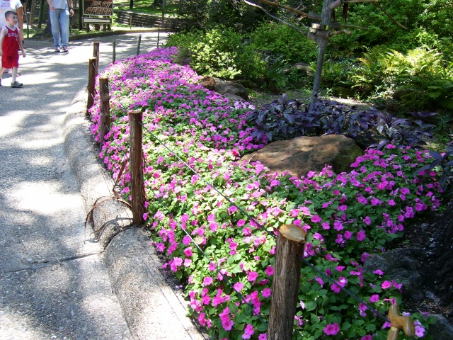 Home And Garden Flowers Along Path And Walkway