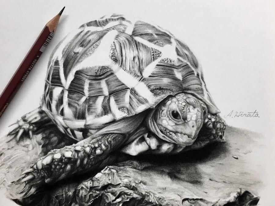 05-Tortoise-A-Hirata-www-designstack-co