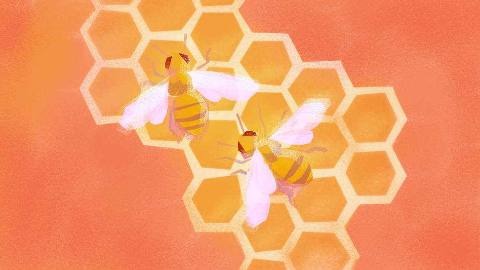 beautiful place preview of honeybees on honeycomb